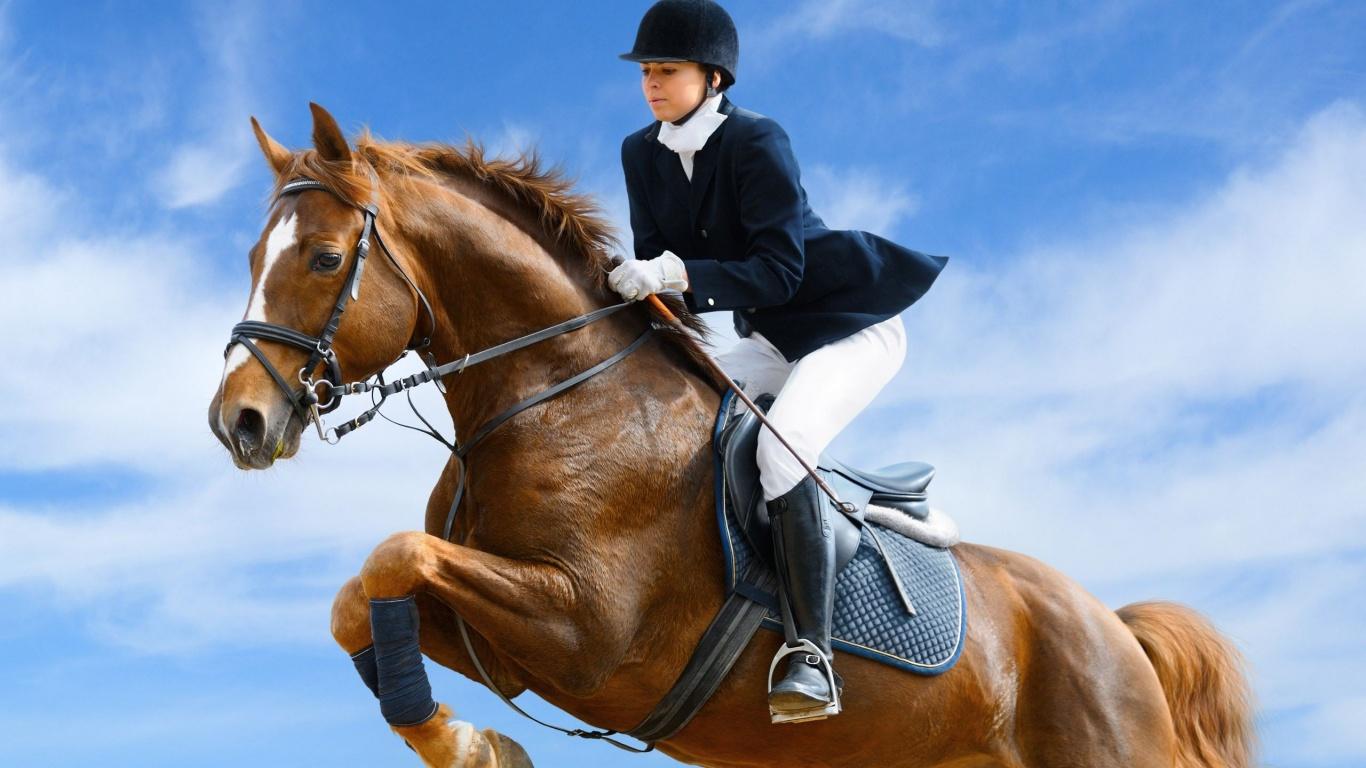 Поздравления с конным спортом